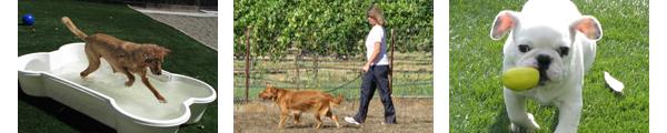 Pet Boarding Santa Rosa CA